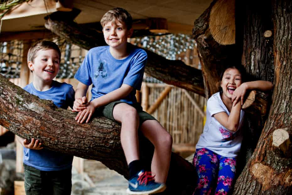 Tree's company … a vast hollow oak tree is a centrepiece of William's Den's indoor zone.