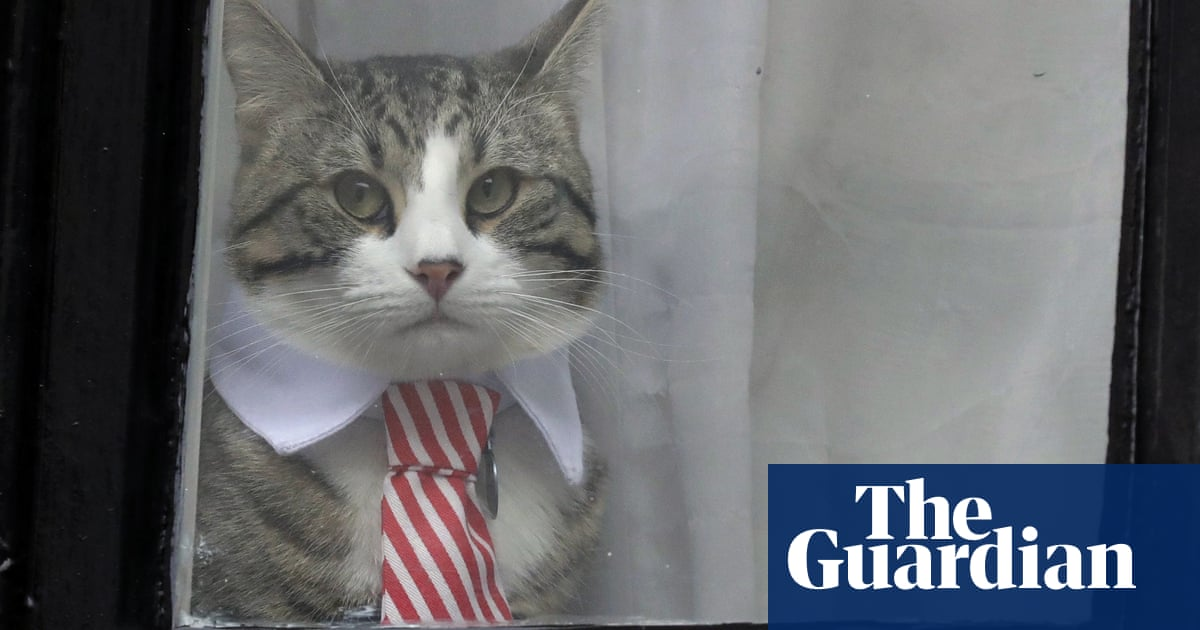 Assange has been collared. His cat knows the feeling