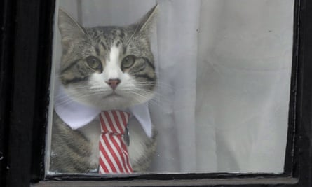 Julian Assange's cat looks out from a window of the Ecuadorian embassy in London. Lesley Kant wonders what has happened to it.