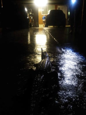 A freshwater crocodile spotted on O'Reilly Street, Mundingburra, on Sunday night during the Townsville floods