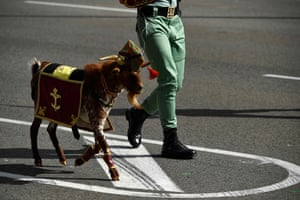 Madrid, Spain: the Spanish Legion's mascot goat parades during the Spanish National Day military parade