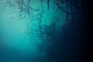 Raindrops hitting the surface of Casa Cenote