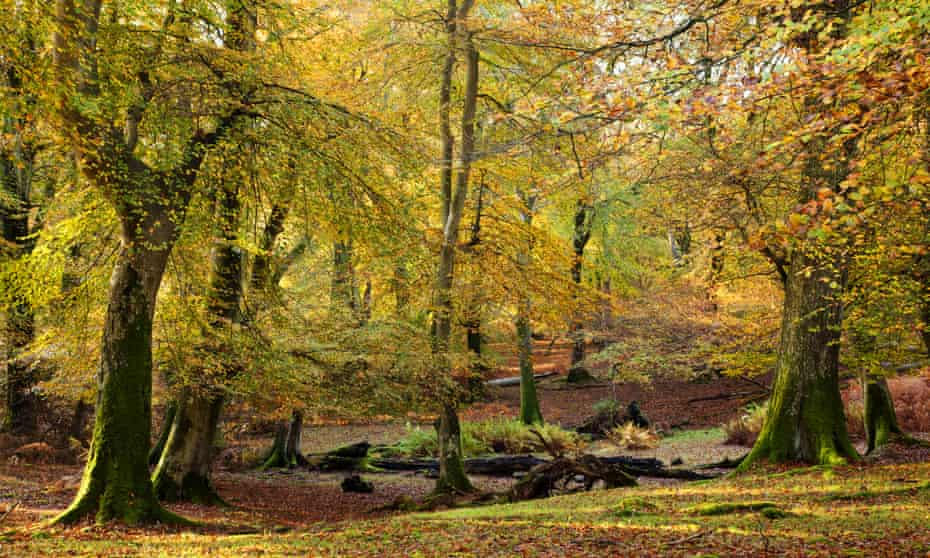 The New Forest in early autumn.