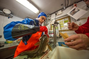 Students sift through fish and marine species bought up by a bottom trawl on the Helmer Hanssen Research ship. Svalbard, Norway.