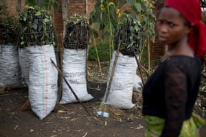 A woman stands next to large sacks of illegally made charcoal, from trees cut from the park
