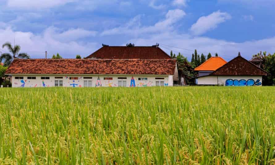 Rice paddies in Canggu in Bali
