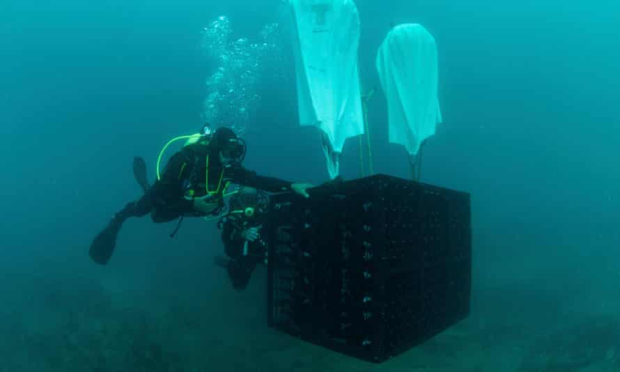 Bottles of wine being lowered to the seabed for the Crusoe Treasure winery.