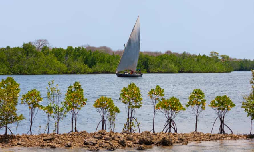 Mangrove forests on the Lamu archipelago, Kenya.