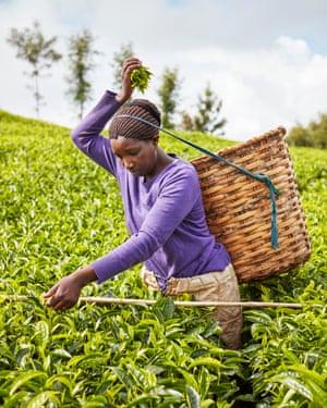 A tea picker in Kenya.
