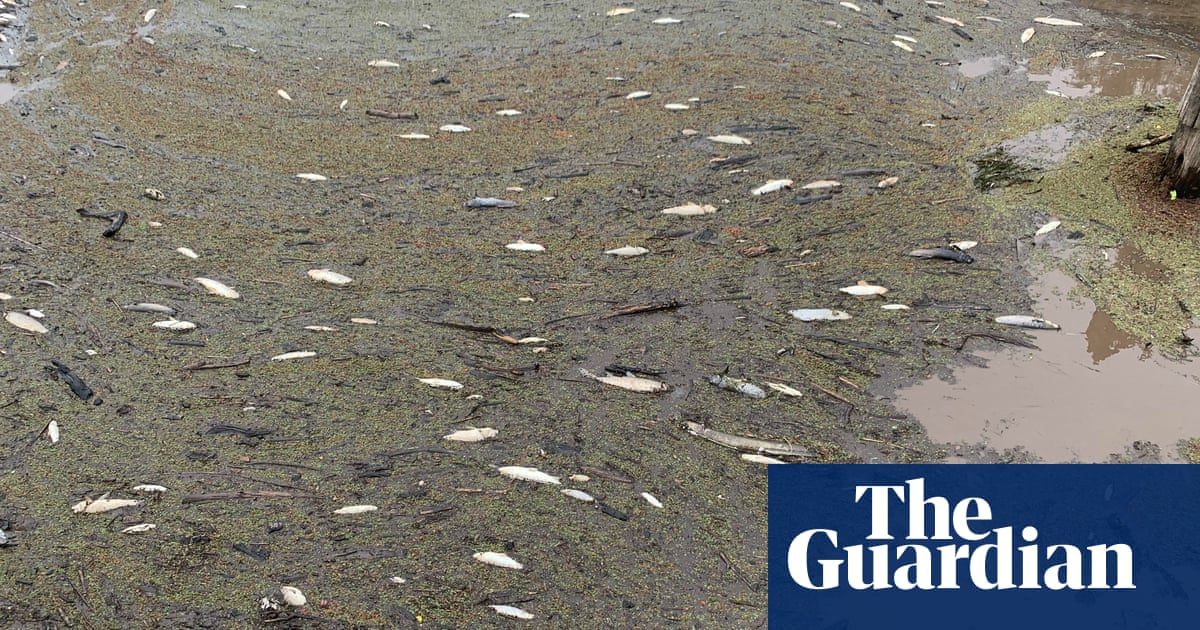 Hundreds of thousands of fish dead in NSW as bushfire ash washed into river