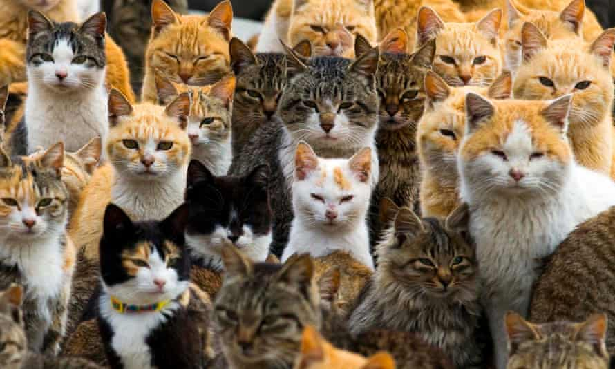 An animal welfare group fears a 'human element' is behind the sharp fall in cat numbers on Umashima off the south-west coast of Japan.
