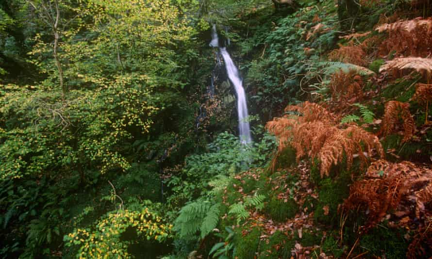 Falls in Dolgoch Ravine Near Tywyn