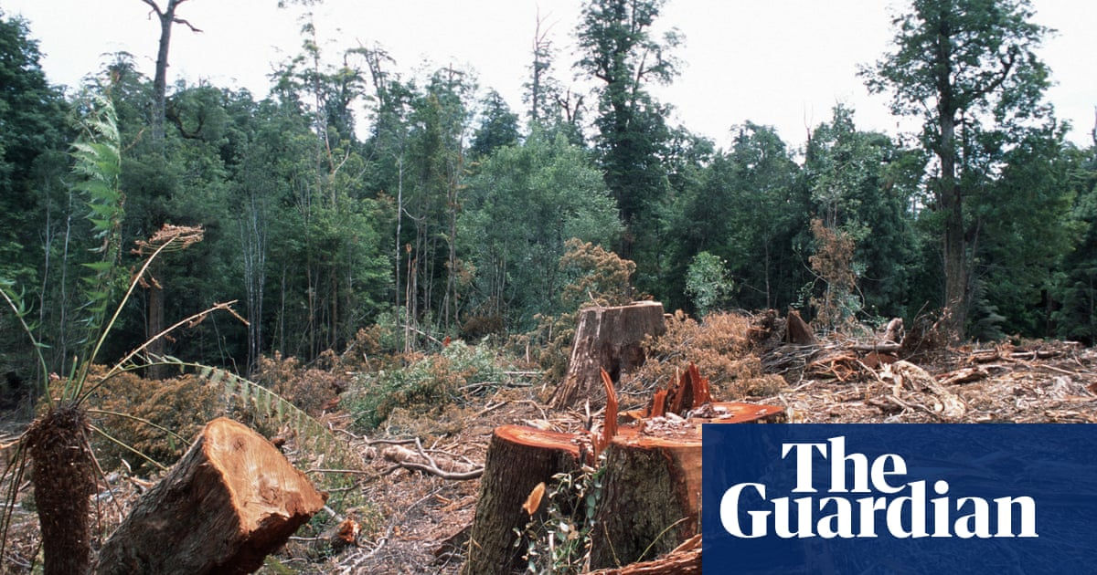 After 20 years of uneasy peace, the forest wars are back