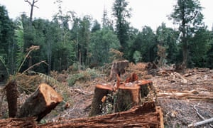 Labor pledges to re-examine logging agreements with the states.