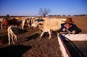Farmer May McKeown feeds the remaining cattle on her drought-effected property on the outskirts of Walgett, NSW.