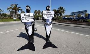 Peta members protest outside Marineland dressed as orcas