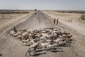 Goat herders Ethiopia.