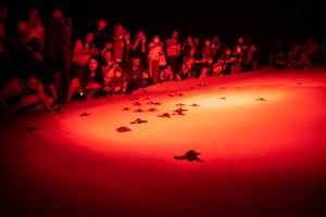 Phukey, ThailandUnder dim glow of less-intrusive red lighting, visitors are seen gathering around the beach to watch the release of Leatherback sea turtle hatchlings into the sea