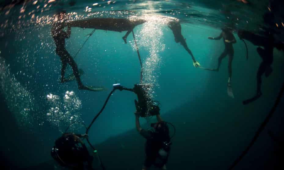 Unterwasserfotografie von The Swarm.