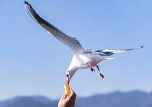 A visitor feeds a black-headed gull at the Haigeng dam in Kunming