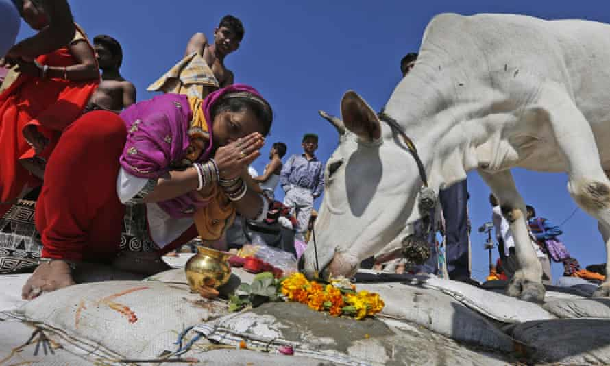 An Indian woman prays to a holy cow.