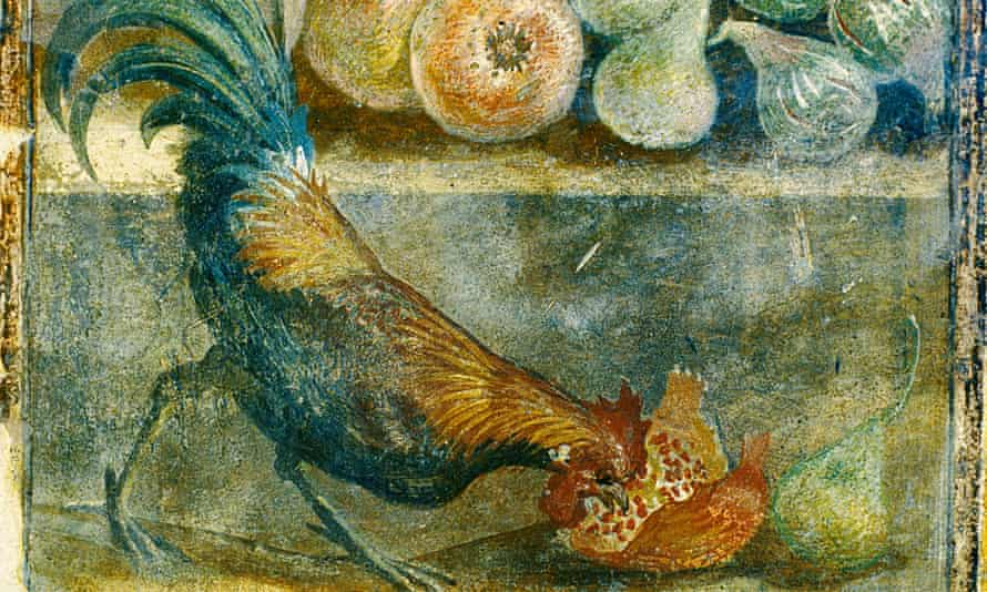 A cockerel eating a pomegranate