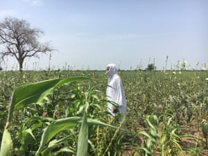 A farmer checks fields of sorghum, sesame and maize in Gedaref state