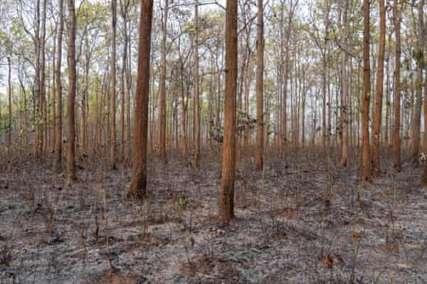 Parts of the Manchabandha reserve forest have been left devastated by fire.