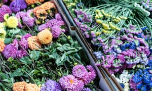 Boxes of flowers on display at Covent Garden flower market.