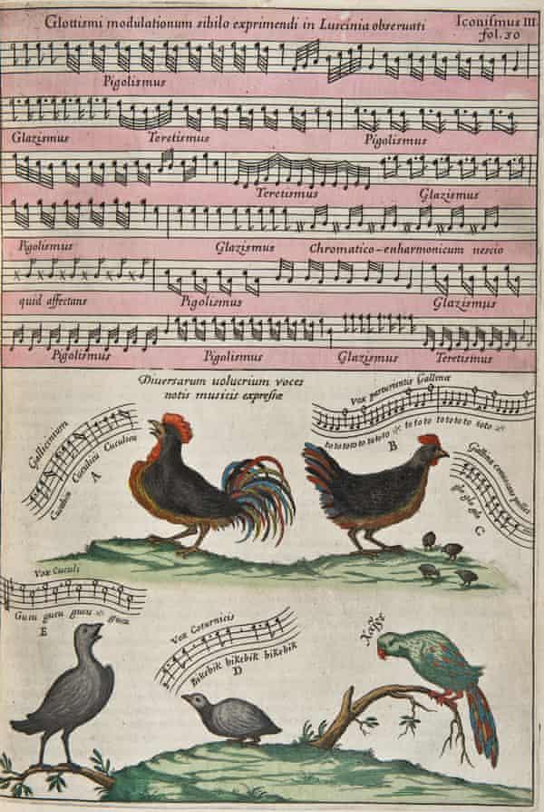 Birdsong notated in the Athanasius Kircher, Musurgia Universalis, c 1650.