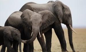 A family of elephants in the Amboseli National Park southeast of Kenya's capital Nairobi.