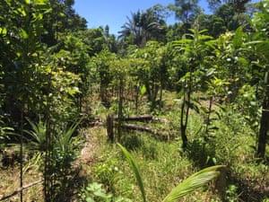 Vanilla and trees