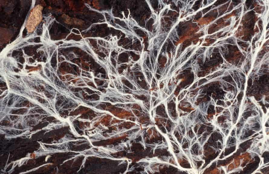 mycelia growing through rotting bark