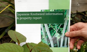 Why won't Network Rail tackle knotweed near my house? | Money | The