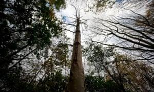 Ash dieback near Ipswich