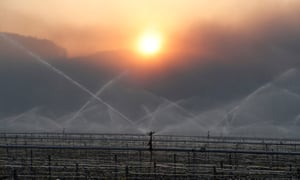 Water is sprayed early in the morning in vineyards outside Chablis