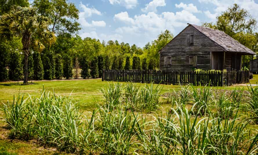 Demonstration sugarcane grows outside preserved slave quarters at The Whitney Plantation in Wallace, Louisiana.