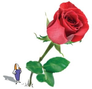 Illustration of woman looking up at a photo of a rose