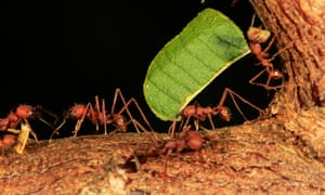 'No one seems to have the desire to wipe all ants off the face of this Earth.'