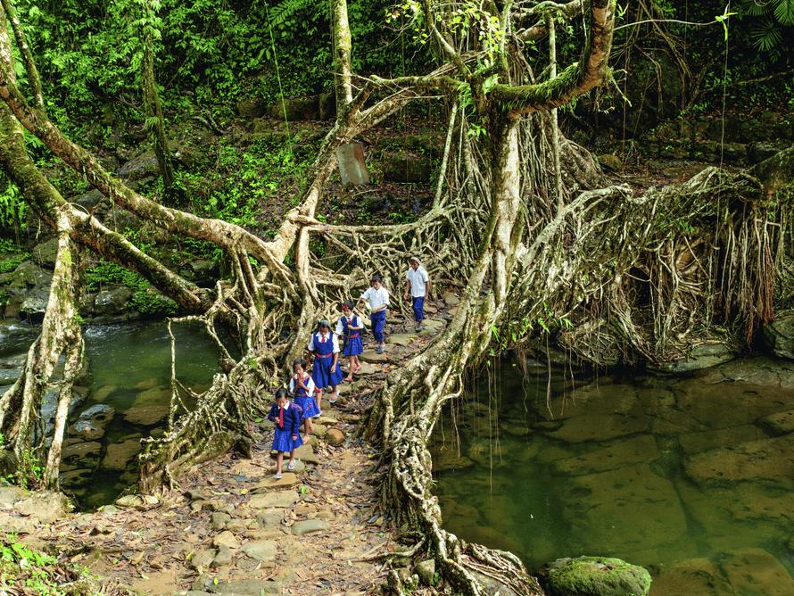 Yaşıyor!  … Çocuklar Hindistan'daki Mawlynnong kök köprüsünü geçiyor;  bu yapılar Watson'ın Lo-TEK kitabında yer almaktadır.