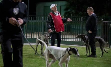 Greyhound racing at Wentworth Park in Sydney, Australia