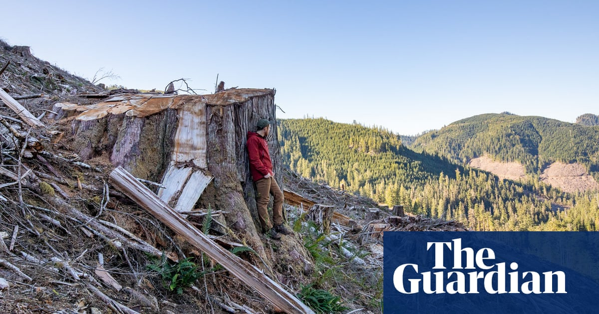 Photography campaign shows the grim aftermath of logging in Canada