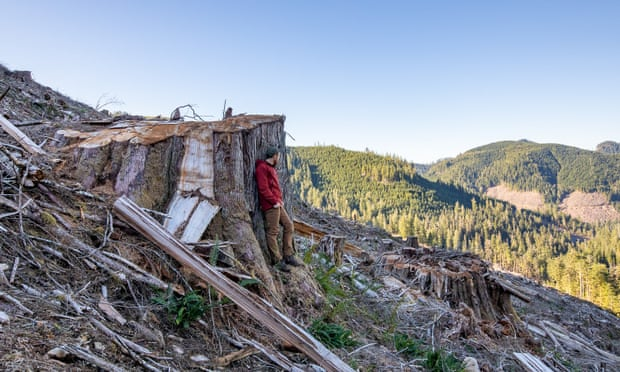 Photos Showing The Grim Results Of Logging In Canada's Old Forests