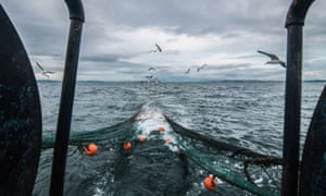 Seagulls follow a fishing trawler