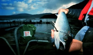 Salmon farm, Lewis in the Western Isles, Scotland