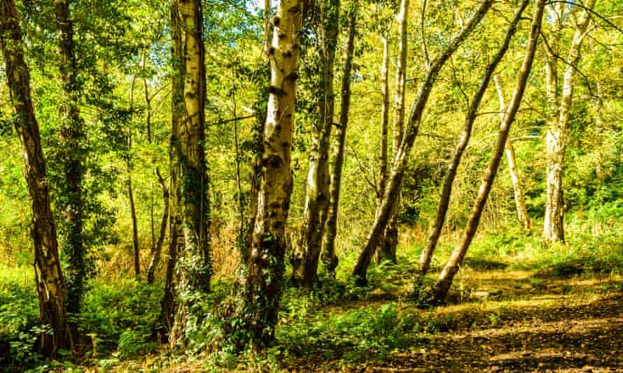 Moseley bog, inspiration for Tolkien's enchanted primordial Old Forest.