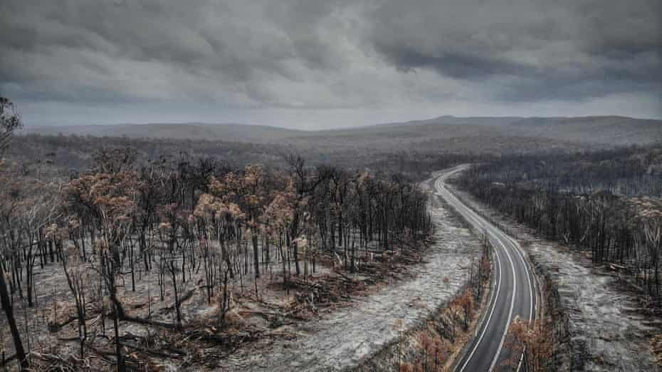This image, taken on 11 February 2020 near the town of Genoa in East Gippsland, Victoria, shows the effects of fire beside the Princes Highway