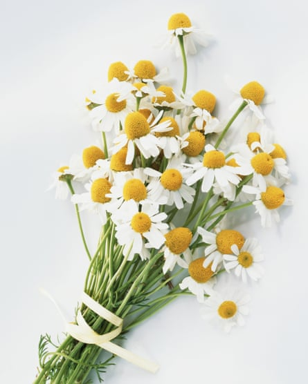 Flower detox: camomile tea is great for dried out plants.