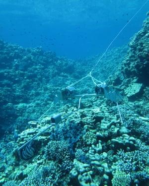 صخره های مرجانی در Rowley Shoals
