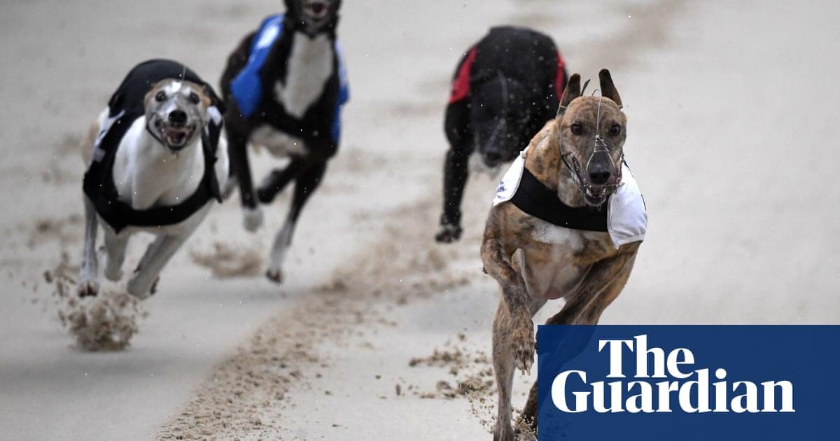 Activists renew calls to end greyhound racing as 400 die despite lockdowns